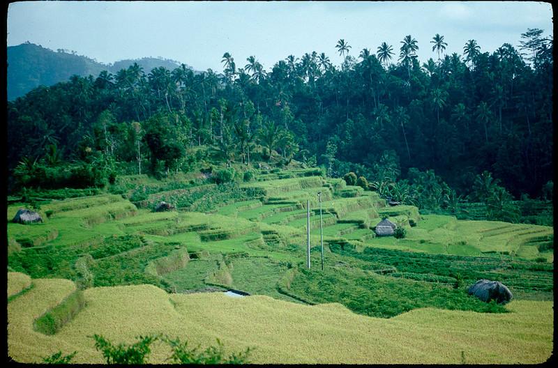 Indonesia1_028.jpg