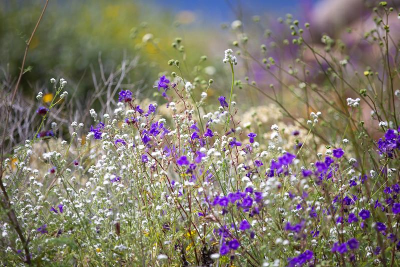 Spring Flowers B-137.jpg