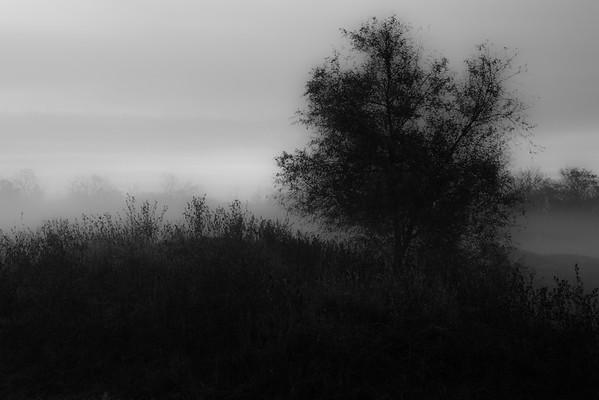 Texas Fog