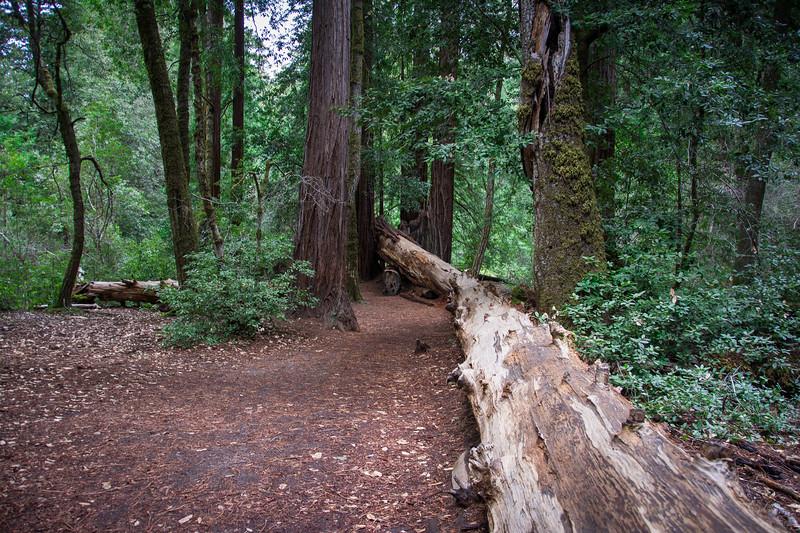 Redwood-63.jpg