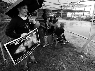 Toronto Cow Save's 30 Hour Vigil