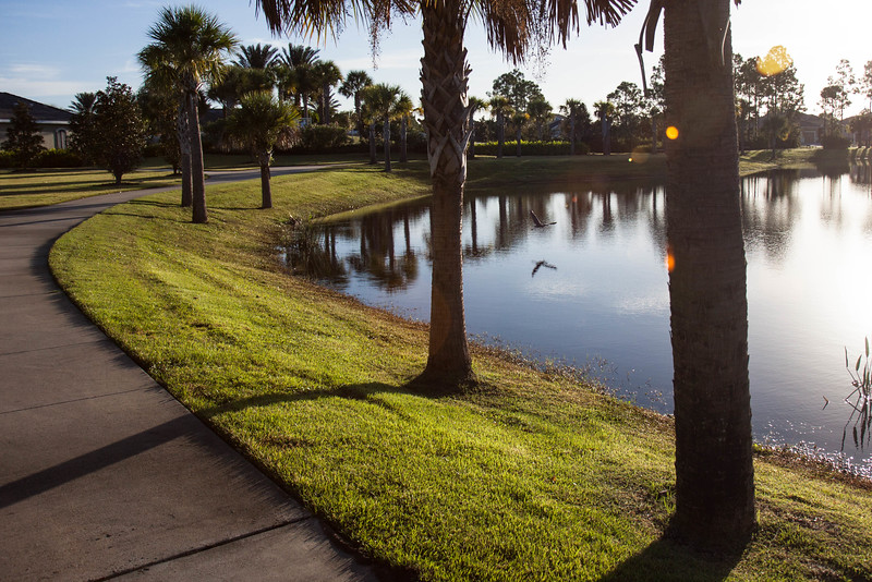 Grand Palm 20151022-2217.jpg