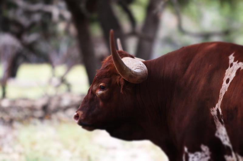 Wildlife Ranch-0619.jpg