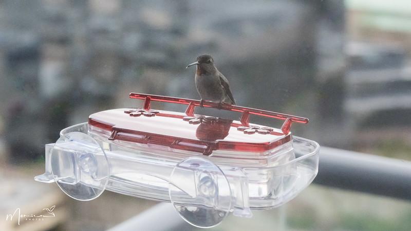 2021 - The Hummingbird Chronicles-1396_edit-2.jpg