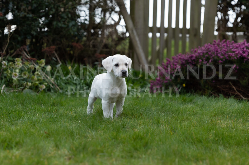 Weika Puppies 24 March 2019-8690.jpg