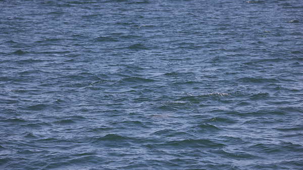 June 16 whale watching trip photos
