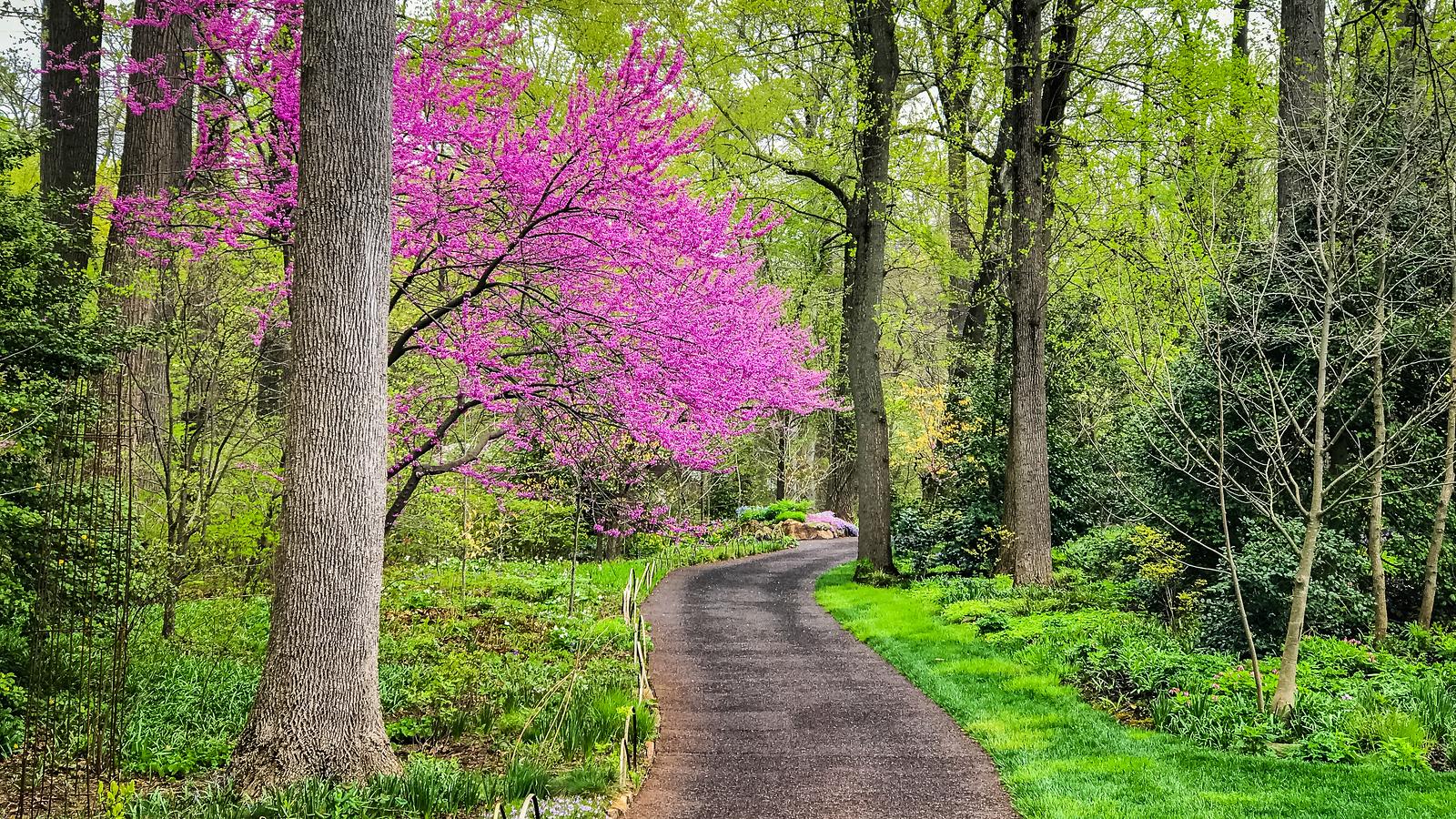 踏春归来, 明媚的春色