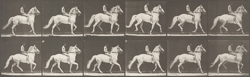 Horse Clinton ambling, bareback with nude rider (Animal Locomotion, 1887, plate 590)