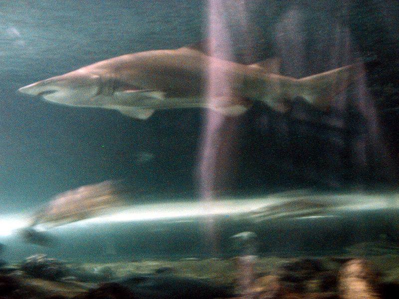 39.  Sydney Aquarium.JPG