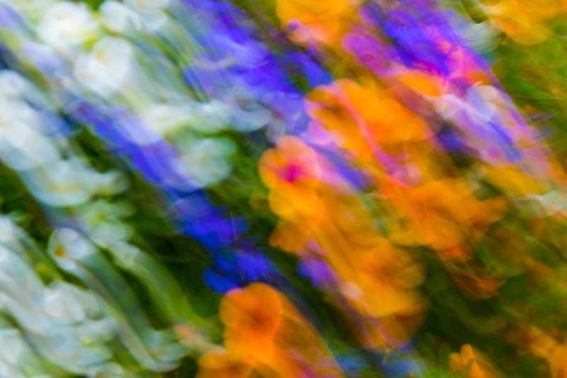 Abstract flowers blur across your screen