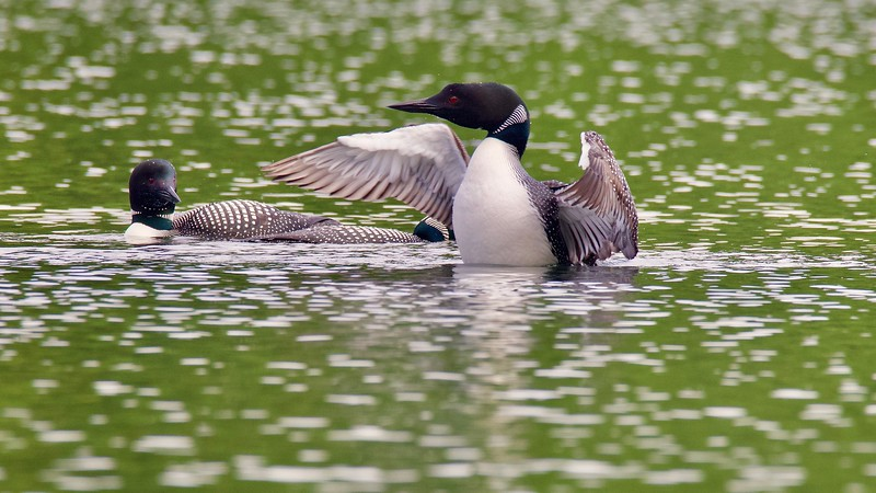 Bainbridge Lake, Port Alberni,
