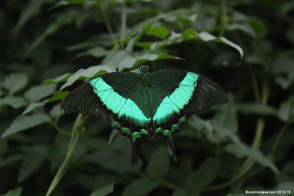 Butterflies & Moths. Set 9