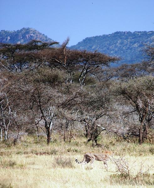 Serengeti (145).JPG