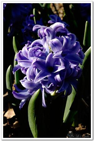 2008.3.15.Dallas Arboretum