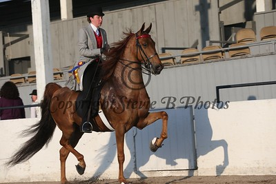 7. ASB Five Gaited Pleasure