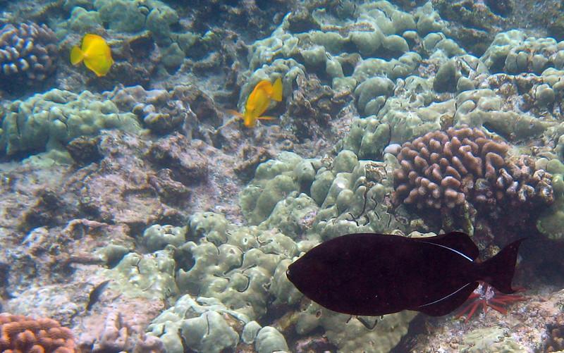 516- 20080416- Hawaii 20-Snorkelling IMG_0769.jpg