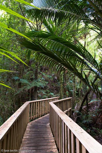 Waiau Falls Scenic Reserve