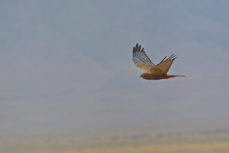 Ngorongoro 8.jpg