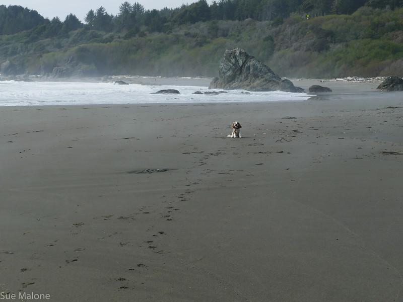 Walking on Harris Beach (23 of 24).jpg