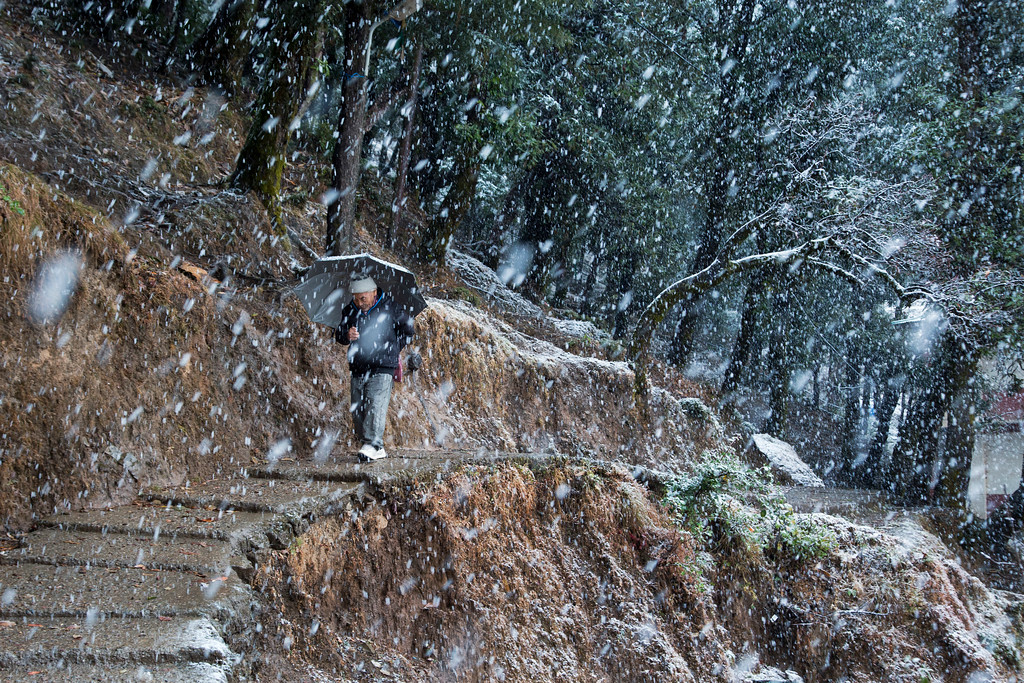 . An elderly man walks with an umbrella as it snows in Dharmsala, India, Saturday, Jan. 7, 2017. This Himalayan region has seen very little snow for the past three years. (AP Photo/Ashwini Bhatia)