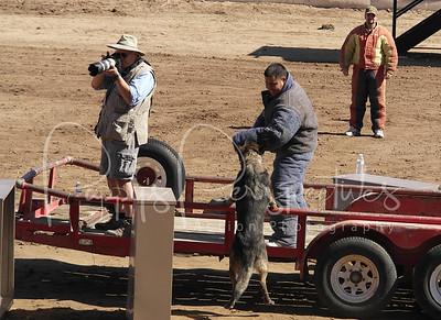 Arizona State Fair Police K9 Demo 2012