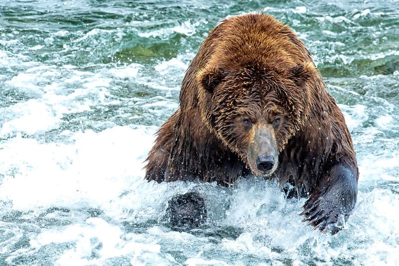 Alaska_2013_FH0T8401.jpg