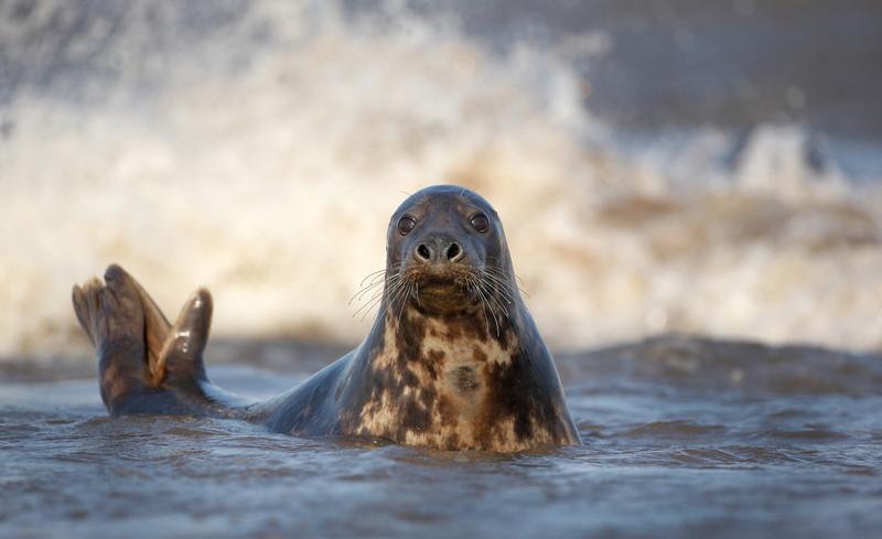 Seal - 7630.jpg