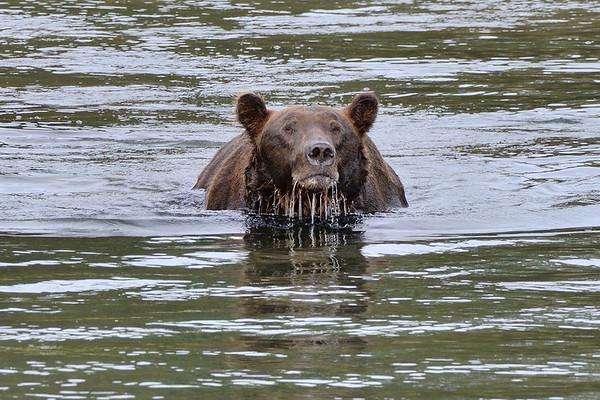 Travelogue-Alaska
