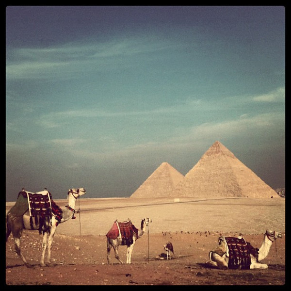 Camels with a view of Giza Pyramids. #Egypt