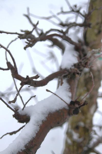 Easy Pickins Winter 011-1676783704-O.jpg