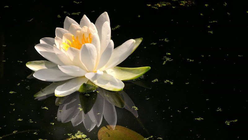 LILY WATER  2 .jpg