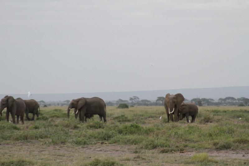 Kenya 2019 #2 410.JPG