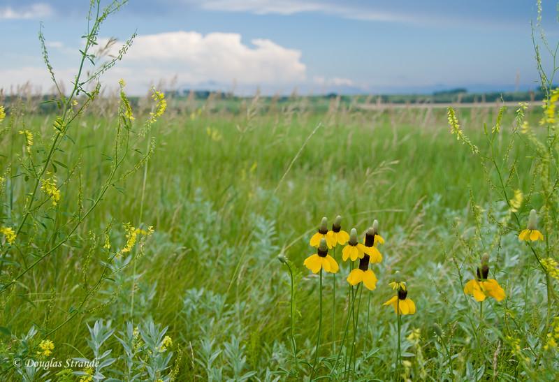 2011   North Dakota wildflowers