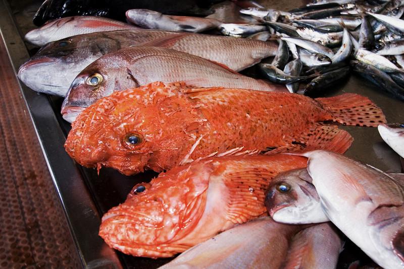 Fish Market Scorpions.jpg