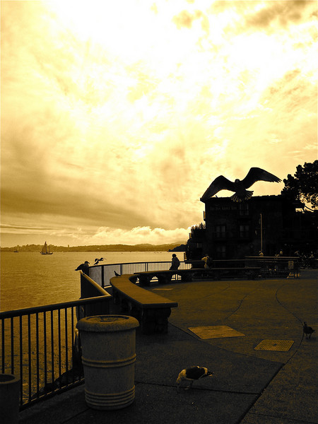 Sausalito ferry landing.
