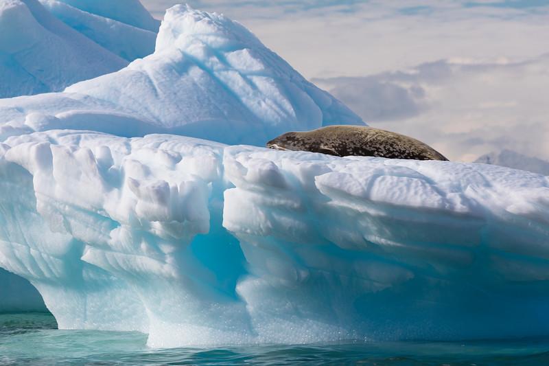 _MG_7480_20170122_Antarctica.jpg