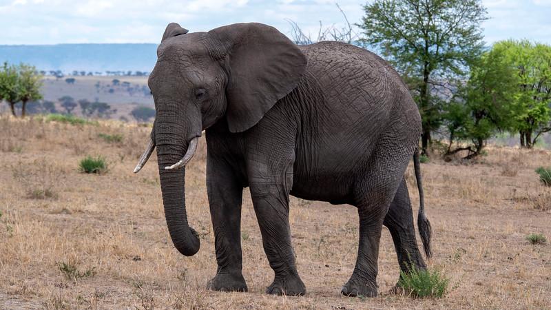 Tanzania-Serengeti-National-Park-Safari-Elephant-03.jpg