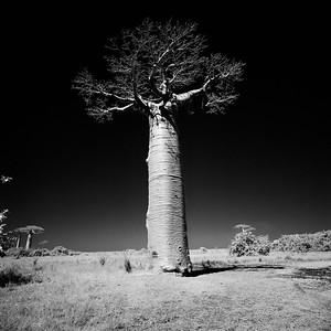 Baobab Heroes
