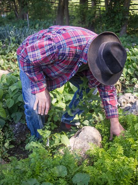 statlander farm 9.jpg