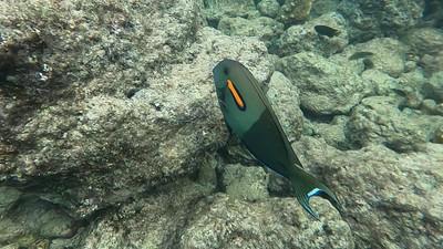 Maui Tropical Fish