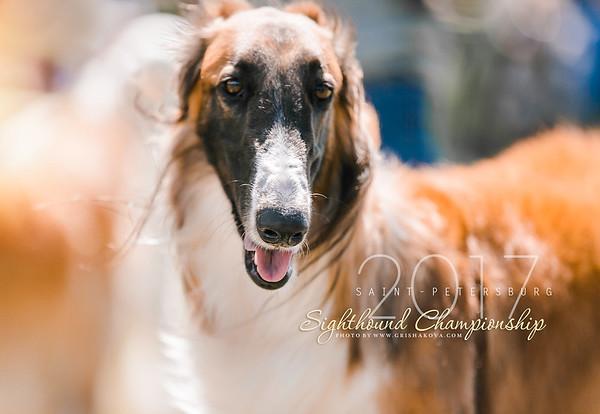 Russian Sighthound Championship  2017 St-Petrsburg