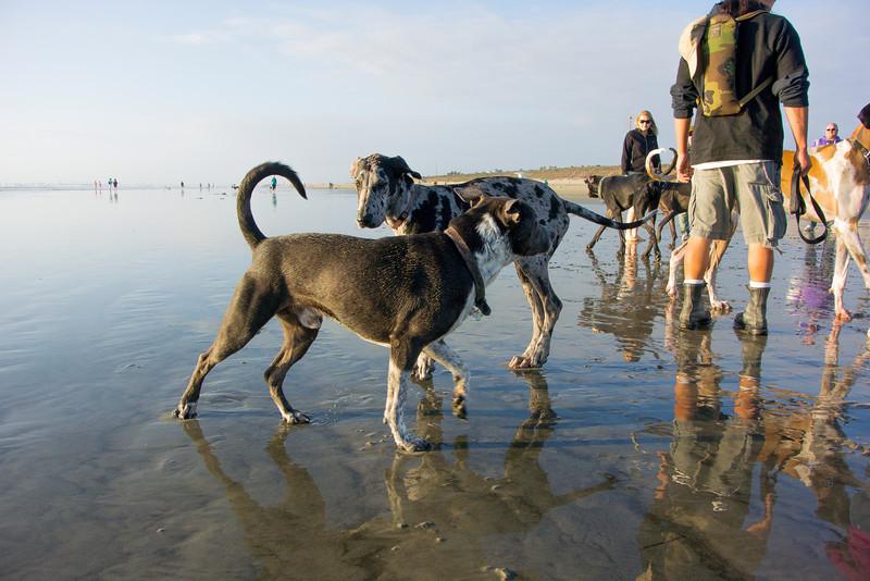 dogs_beach-46.jpg