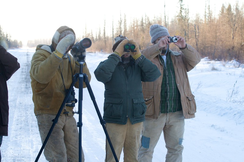birders looking at lifer Great Gray Owl McDavitt Road Sax-Zim Bog MN IMG_1353 (1).jpg