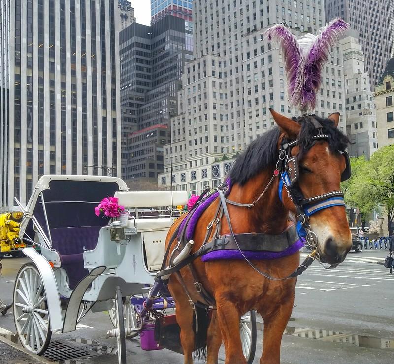 Central Park Horse