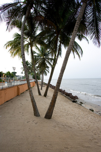 Palm trees outside Le Meridien Hotel in Libreville, Gabon.