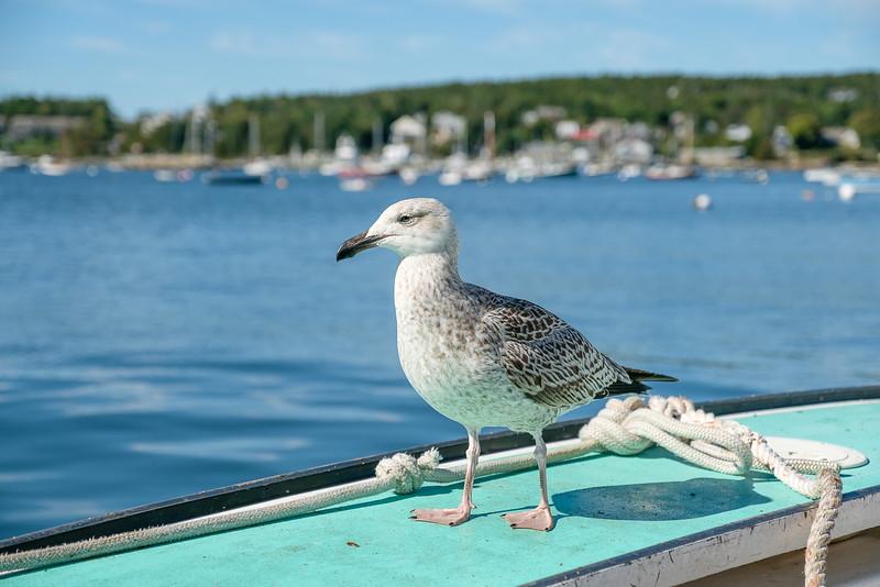 Gull on Boat in Harbor