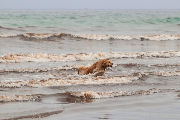 Pups of York Beach