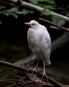 2008-08-25 Oregon Zoo