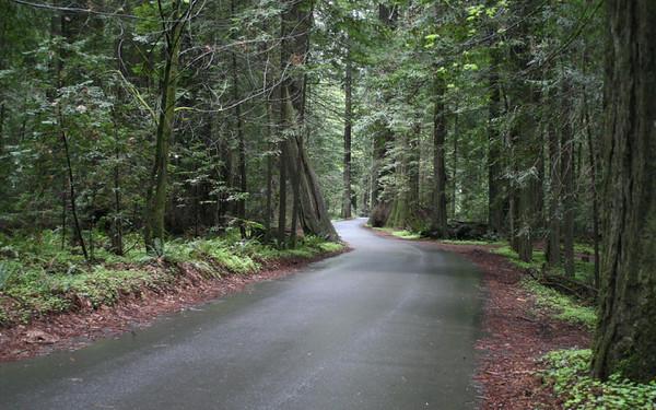 Roads + Pathways