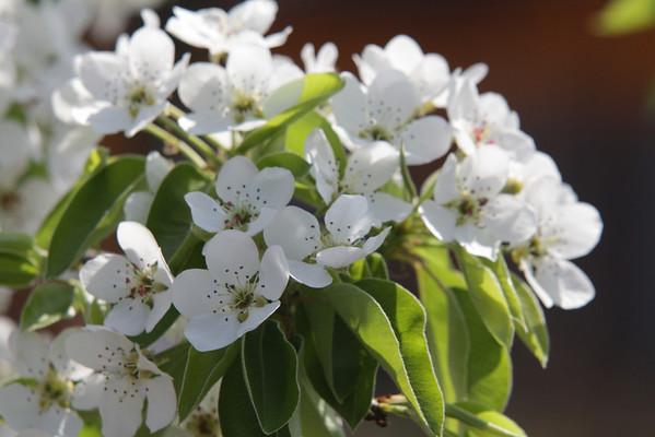 Easter 2011 - Flowers